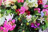 Blumen_woerlitz